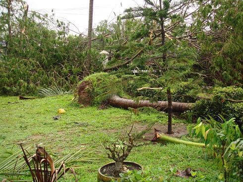 サイクロン直撃後、家の庭を見てみると・・・